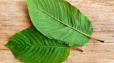 THE TWO KEY KRATOM ALKALOIDS YOU MUST KNOW