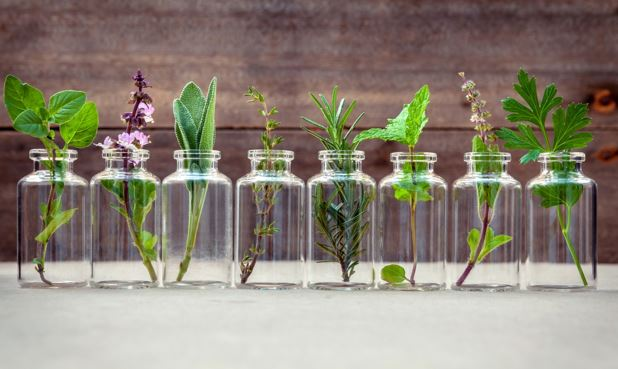 Reasons to Use Botanical Products