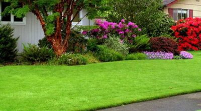 5 Tips For A Beautiful Lawn