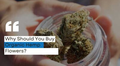 Why Should You Buy Organic Hemp Flowers